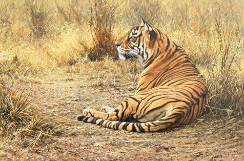 Original Wildlife Paintings