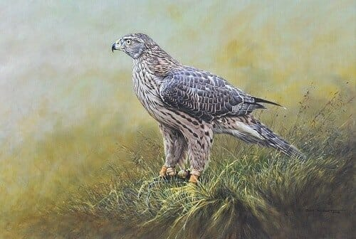 Bird of Prey Paintings