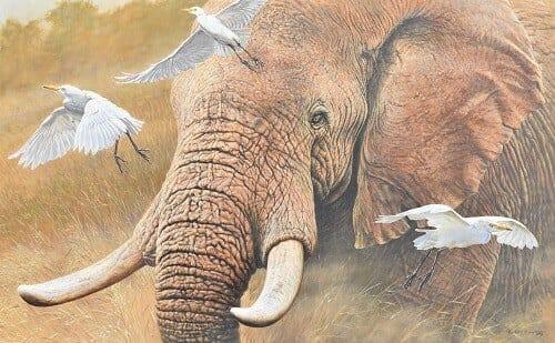 Black Friday Wildlife Art Deals