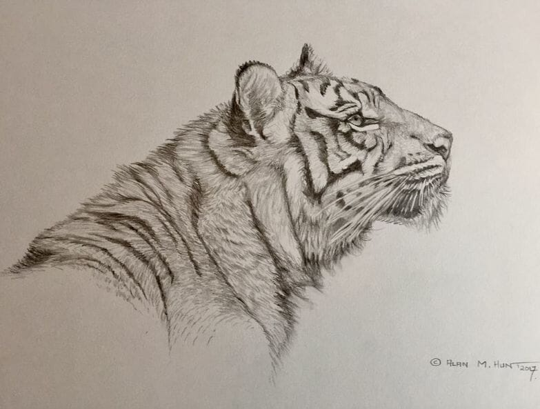 Wildlife Art Sketches